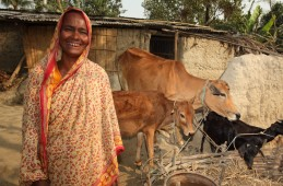 Ultra-poor woman in Naogaon with her cattle